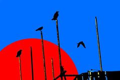 Omens (glukorizon) Tags: animal bird blauw blue bouwterrein coendersbuurt crow delft dier hss kraai nederland red rood scaffold sliderssunday steiger sun vogel westerkwartier zon zuidholland