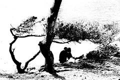 DSC_7403_3497.- Tendresse au bord de la mer. (angelo appoloni) Tags: francia costa azzurra saintjeancapferrat promenade des fossettes tenerezze mare bianco e nero france cote dazur saintjeancap ferrat tenderness edge sea pines bend by wind black white