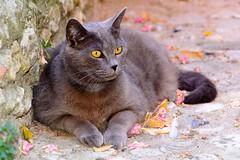La dolce vita (Geert Van Keymolen) Tags: narni umbria italië it kat cat pussy italia italy pet huisdier chat umbrië