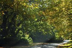 Mt Wilson 6 (trisharooni) Tags: australia autumn mtwilson breenhold