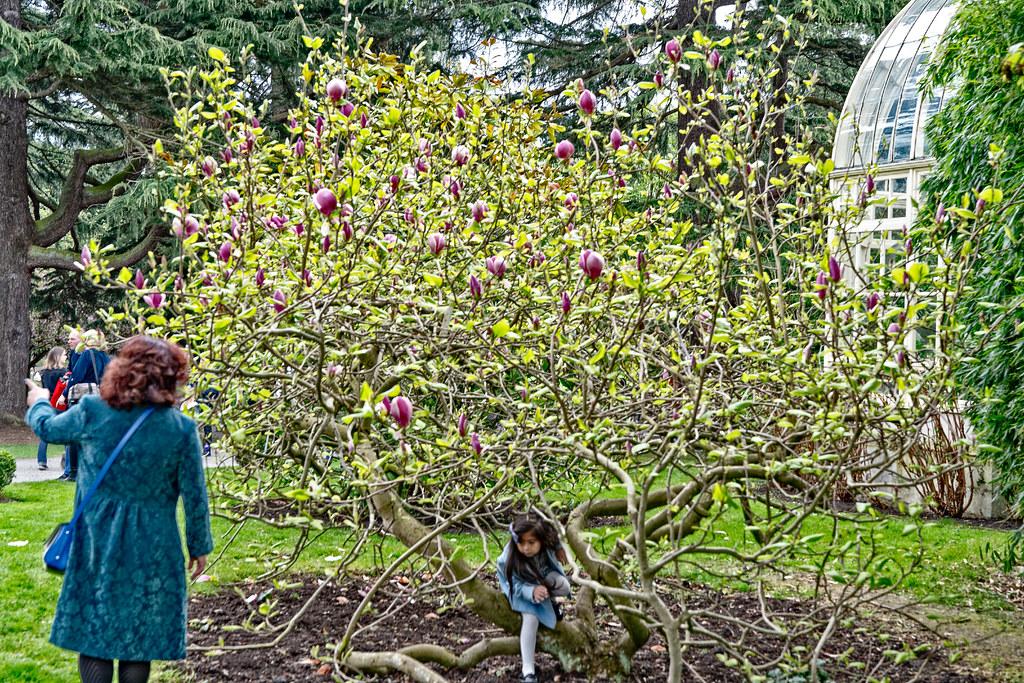 FARMLEIGH HOUSE [ GROUNDS AND GARDENS PHOTOGRAPHED APRIL 2017]-127233