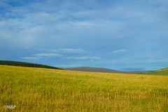 Beautiful speyside (MF[FR]) Tags: 2016 ecosse scotland sky landscape clouds colors fields countryside olympus minimalist voyage paysage rape couleurs ciel champs nuage colza speyside campagne écosse tg850