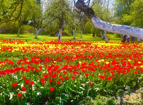 Tulpju Festivāls Burbišķu muižā