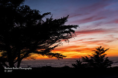Sunset Through the Pines - Explored (RedHatGal: Barbara Butler/FireCreek Photography) Tags: sunset pines ocean sea centralcoast cambria ca winter sky outdoor landscape barbarabutlerphotography firecreekphotography redhatgal