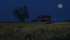 (nadiaorioliphoto) Tags: notte night luna sky fields campi paesaggio notturno moon