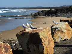 Coffs Harbour (Lesley A Butler) Tags: coffsharbour australia nsw