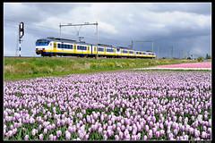 NSR-2133+2959_Hil_18042017 (Dennis Koster) Tags: nsr ns personentrein passagierstrein hillegom bollen