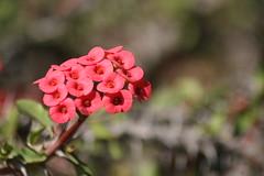 Colomos Forest photos - flower (Mister Molacho) Tags: macrophotography macro canon 70300 sigmalenses méxico mrmolacho