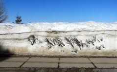 Soldes de fin de saison (Robert Saucier) Tags: saintelucesurmer sainteluce basdufleuve bassaintlaurent ciel sky neige snow hiver winter trottoir sidewalk pavement bleu blue blanc white arbres trees img7969