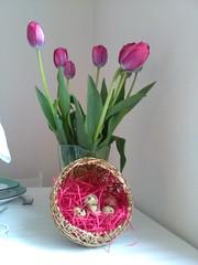 Surrexit Christus, alleluia! (Bambola 2012) Tags: easter uskrs pasqua tulips tulipani eggs jaja uova nest gnijezdo nido 2017