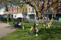 Nazanin's Tree (SReed99342) Tags: london uk england nazaninzaghariratcliffe tree iran woman arrested iranian fortunegreen