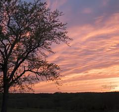 Evening Sunset (Thomas  Johnson Photography) Tags: missouri unitedstates outside outdoors canon 5dmarkiv markiv 5d sunset sunrise scenic beautiful gorgeous stunning sun clouds tree silhouette amazing colorful orange red breathtaking thomasjohnsonphotography ©2017thomasjohnsonphotography 2017thomasjohnsonphotography 2017 horizon
