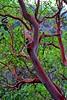 10991699_1053006791382984_3376584197391057121_o (sophiakoni) Tags: strawberrytree tree redbark