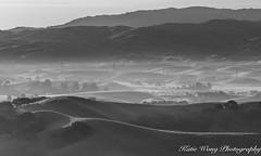 Pleasanton's morning (katiewong511) Tags: pleasanton morning mist fog green hills rolling hill spring sunrise sunol reginalpark eastbay bayarea blackwhite
