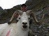 Alaska Dall Sheep Hunt & Moose Hunt 2