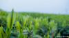 (yomoneko1) Tags: leica dlux3 felt pottering bicycle beach tealeaf flower sunrise sun