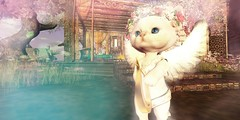 Angelic Saffia Kittyshins (ColeMarie Soleil (Cole's Corner)) Tags: saffia widdershins fantasy faire 2017 secondlife sl dawns promise