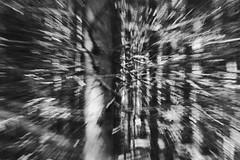 Zoom (roberta.marcon) Tags: cansiglio natura fotografia nikonphotography nikonitalia nikon treemagic tree alberi bosco zoom