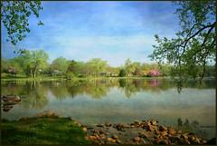 After the Rain (TumblingRun) Tags: texture nature reflections morninglight nikon iowa cherokee canadagoose crabapples springlakepark hss sigma1020mmf456exdc d7100