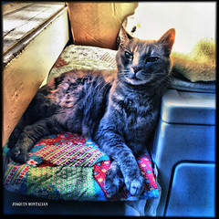 Cleo (JOAQUIN MONTALVAN) Tags: color art cat photography cleo iphoneography iphone4s joaquinmontalvan