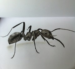 Formica (Giuseppe Mameli) Tags: blackandwhite art pencil insect big artist drawing derwent ant draw chiaroscuro disegno biancoenero insetto formica blending shading sfumino uploaded:by=flickrmobile flickriosapp:filter=nofilter