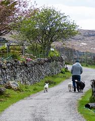 The Murchisons return home (AnnieMacD) Tags: lamb westerross applecross culduie
