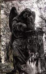 Angel, Olsany (Alessandro Crea) Tags: blackandwhite bw sculpture white black monochrome statue angel blackwhite prague cemetary statues prag praga angels olsany repubblicaceca