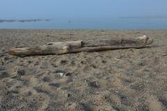 Toronto Driftwood (pokoroto) Tags: summer toronto ontario canada may driftwood satsuki 5    2013 gogatsu   fastmonth 25