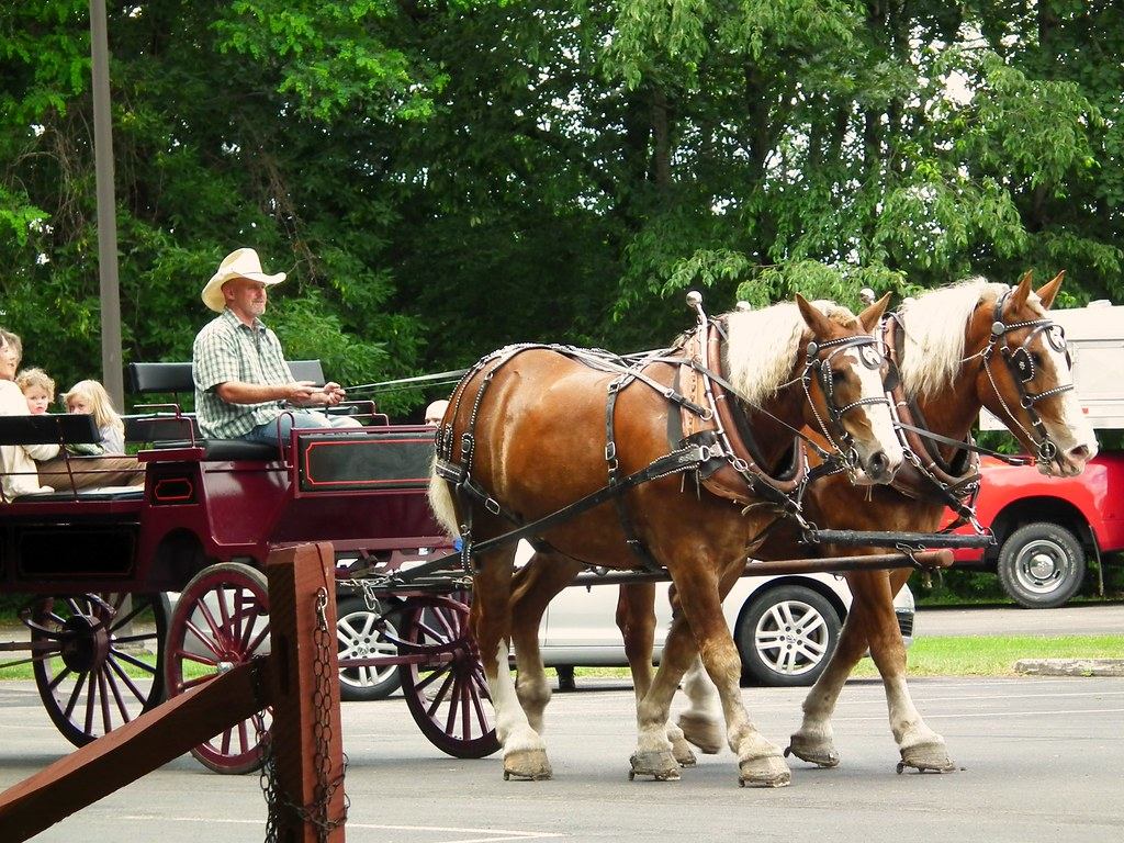 Mount Morris NY Horse and  Carriage Rides