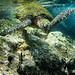 encounter (nosha) Tags: ocean sea orange usa fish green beautiful beauty rock hawaii oahu snorkeling northshore sharkscove feef