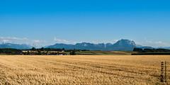 Sommerlandschaft (haslingeralfred) Tags: landscape austria scenery landschaft obersterreich traunstein upperaustria stichworte badwimsbach badwimsbachneydharting badwimsbachnh