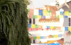 """Alaior (Menorca).""""Enramadas"""" 5 (joseluisgildela) Tags: fiestas islas menorca calles baleares alaior"""