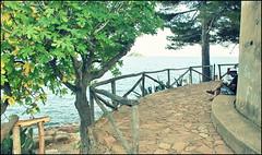 Alle 6.30 Pereira sent bussare alla porta... (Stelle buone) Tags: foglie alberi relax torre libri isola scogli lettore ogliastra fichi santamarianavarrese romanzi torrepisana