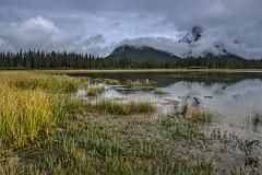 Banff in the fall (Jackpicks) Tags: canada fall fallcolor marsh mountrundle banffnationalpark vermillionlakes mygearandme mygearandmepremium