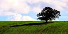 Casting a .... (Explore) (Sandalwood19) Tags: autumn shadow tree fields warwickshire