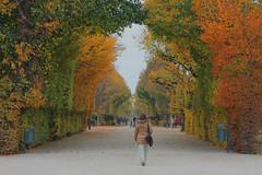 Autumn in Austria (Fins from Budapest) Tags: schnbrunn vienna wien trees castle garden season austria leaf herbst herfst leafs popje schlos goldenart flickrunitedaward flickrtravelaward moppiemuis