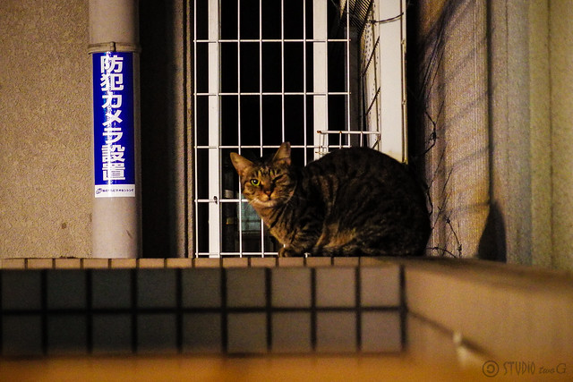 Today's Cat@2013-11-15