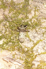 IMG_1996 (Scrubmuncher) Tags: myanmar burma wildburma bbc2 expedition bbcexpedition rosspiper entomologist entomology salu river