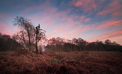 Horsford Woods (Matthew Dartford) Tags: autumn trees sunset red grass golden lowlight woods britain british