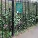 South Grove Allotment Gardens