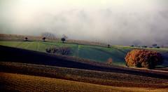 Fine dicembre (raffaphoto) Tags: winter fog landscape december country campagna inverno foschia marcheitaly dicembre2013
