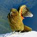 Kea wing New Zealand