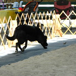 DSCN8466 : Dog caught bird!