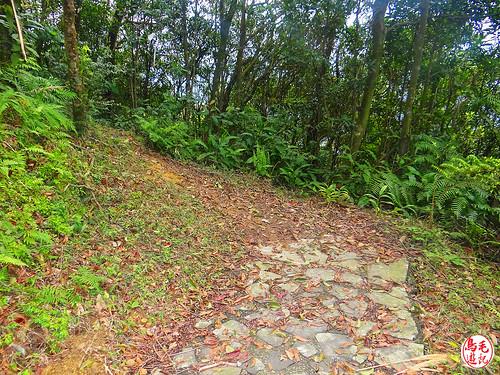 雲海山步道 (20).jpg