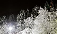 _MG_1486.jpg (pickandpict) Tags: winter mountain snow alps tree night montagne alpes hiver arbres neige nuit vegetal