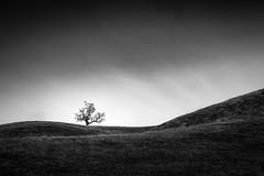 Tree among Sweeping Hills (StefanB) Tags: bw tree monochrome flickr hiking hills geotag treescape 2014 countypark josephdgrant em5 1235mm flvonmirikr