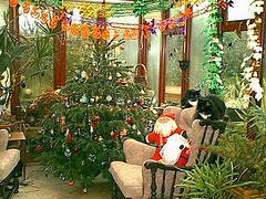 Our chair (wallygrom) Tags: england cats cat westsussex wallaceandgromit eastpreston december2006
