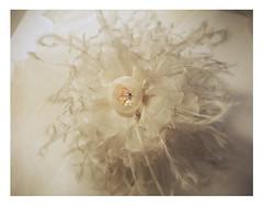fleurs en plumes (HER.Cha.) Tags: france flower fleur fleurs brooch silk corsage plume fleuriste silkflower artificielle broochfrance