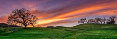 And the fullness thereof... (Calpastor) Tags: travel vacation trip sunset clouds landscape orange sky trees grass grazing green destination peace tranquility solitude