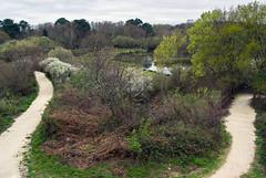 Réserve du Teich (JeanJoachim) Tags: smcpentaxda21mmf32allimited pentaxk10d réserveornithologiqueduteich parcnaturelrégionaldeslandesdegascogne
